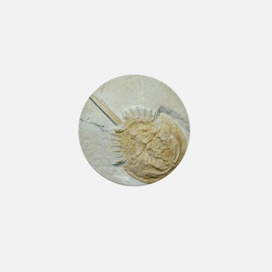 Fossilised horseshoe crab Mini Button