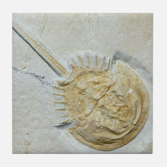 Fossilised horseshoe crab Tile Coaster