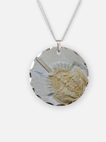 Fossilised horseshoe crab Necklace