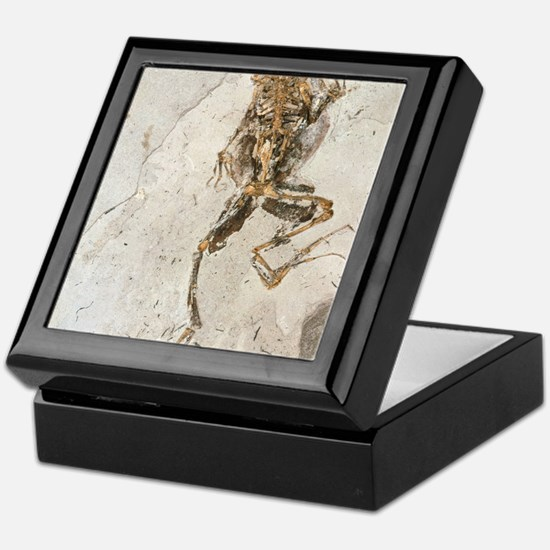 Fossilised frog embedded in rock Keepsake Box