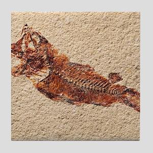 Fossilised fish Tile Coaster
