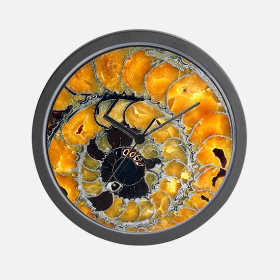 Fossil ammonite Wall Clock