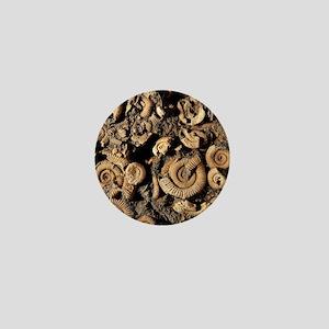 Fossilised ammonites Mini Button