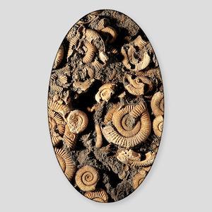 Fossilised ammonites Sticker (Oval)