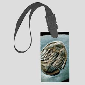 Fossil trilobite, 'Ogyginus corn Large Luggage Tag