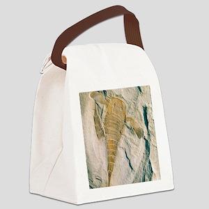 Fossil of a sea scorpion, Eurypte Canvas Lunch Bag