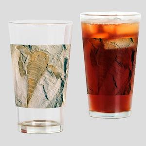 Fossil of a sea scorpion, Eurypteru Drinking Glass