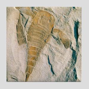 Fossil of a sea scorpion, Eurypterus  Tile Coaster