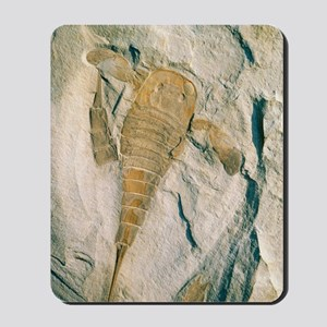 Fossil of a sea scorpion, Eurypterus rem Mousepad