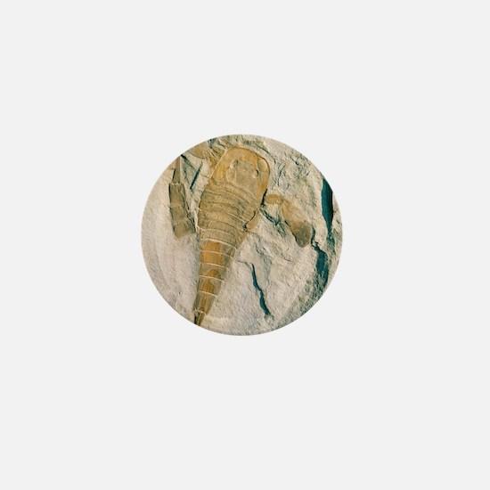 Fossil of a sea scorpion, Eurypterus r Mini Button