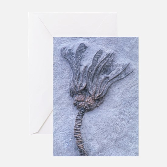 Fossil crinoid or sea lily Greeting Card