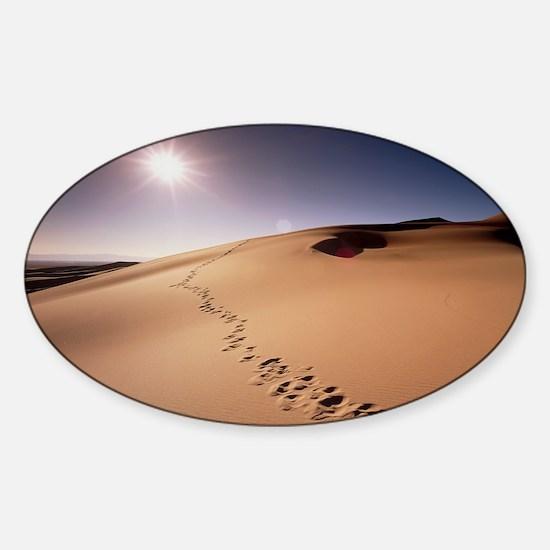 Footprints over sand dunes Sticker (Oval)