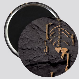 Footprints and skeleton of Lucy Magnet