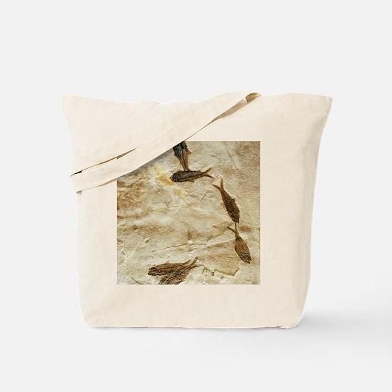 Fish fossils Tote Bag