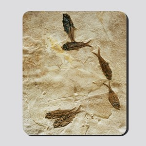 Fish fossils Mousepad