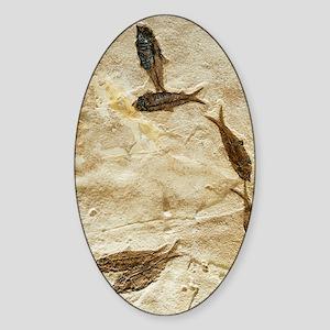 Fish fossils Sticker (Oval)