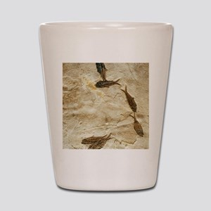 Fish fossils Shot Glass