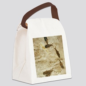 Fish fossils Canvas Lunch Bag
