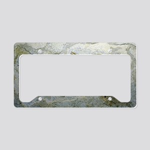 Fish fossil License Plate Holder