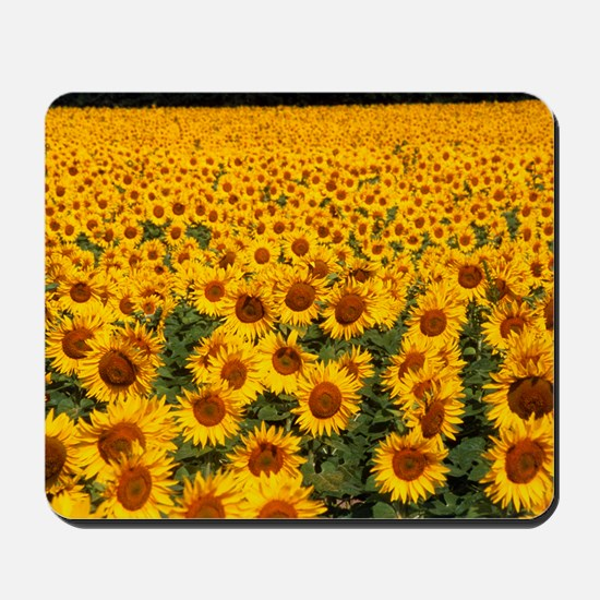Field of sunflowers, France Mousepad