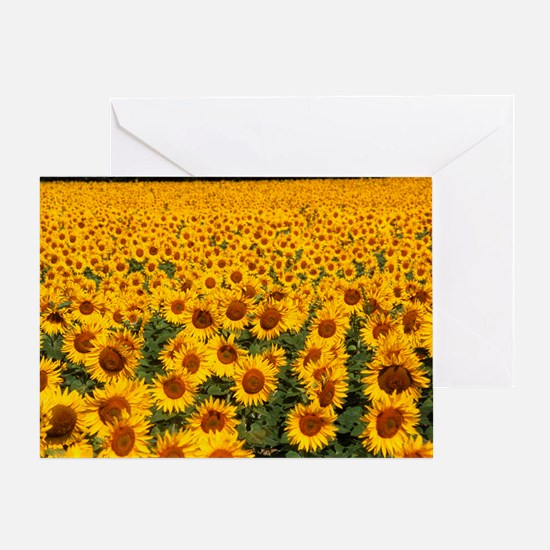 Field of sunflowers, France Greeting Card