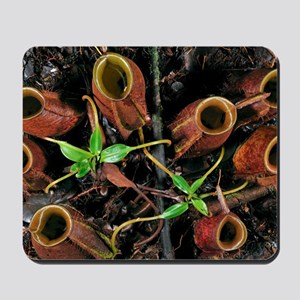 Flask-shaped pitcher plant Mousepad
