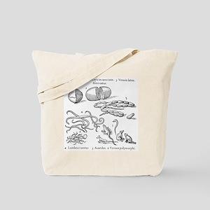 Human parasites, historical artwork Tote Bag