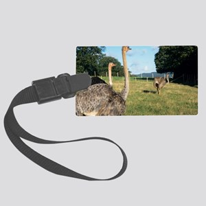 Farmed ostriches Large Luggage Tag