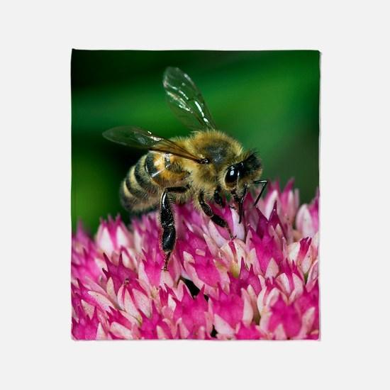 Honey bee feeding on Sedum flowers Throw Blanket