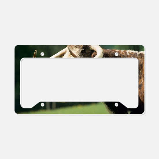 English longhorn cow License Plate Holder