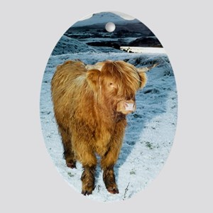 Highland cow in winter Oval Ornament