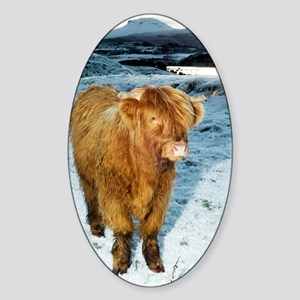 Highland cow in winter Sticker (Oval)
