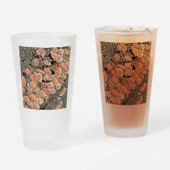 Hippocampal neurons, SEM Drinking Glass
