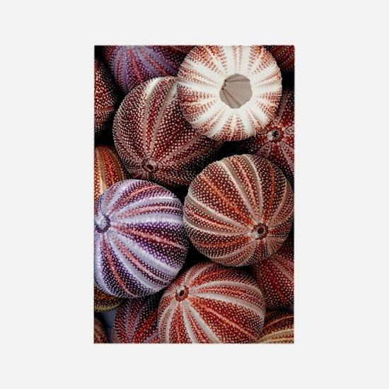 Edible sea urchin souvenirs Rectangle Magnet