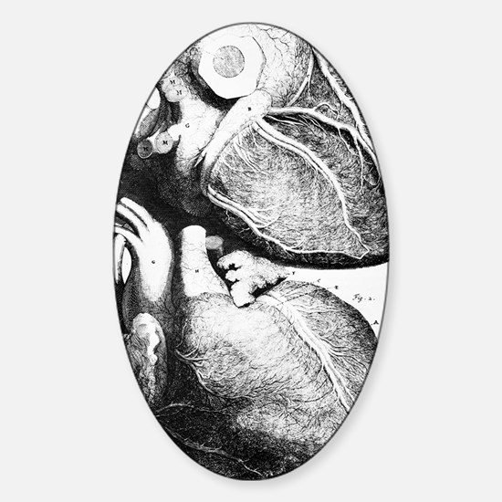Heart anatomy, 18th century Sticker (Oval)