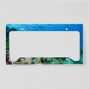 Green sea turtle License Plate Holder