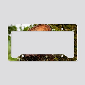 Greater Stag Beetles License Plate Holder