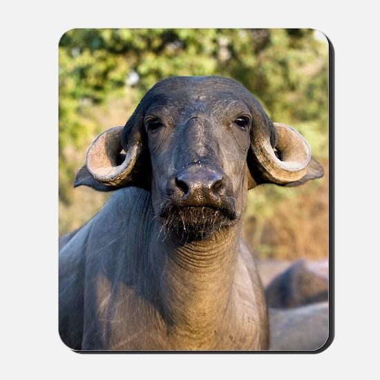 Domestic Asian water buffalo Mousepad