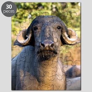 Domestic Asian water buffalo Puzzle