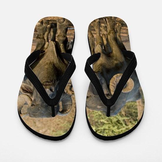 Domestic Asian water buffalo Flip Flops