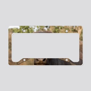 Domestic Asian water buffalo License Plate Holder