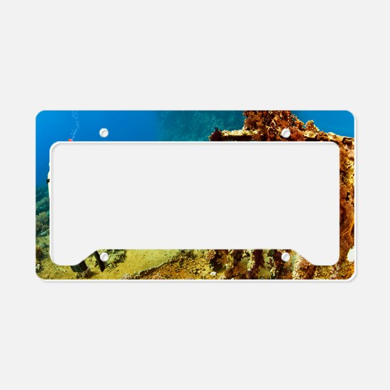 Diver taking photographs unde License Plate Holder