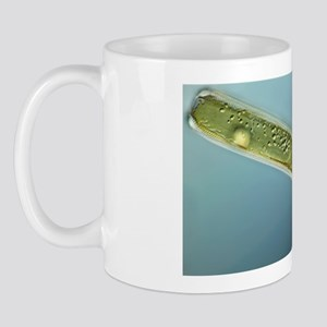 Diatom, light micrograph Mug