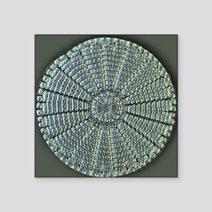 "Diatom, light micrograph Square Sticker 3"" x 3"""