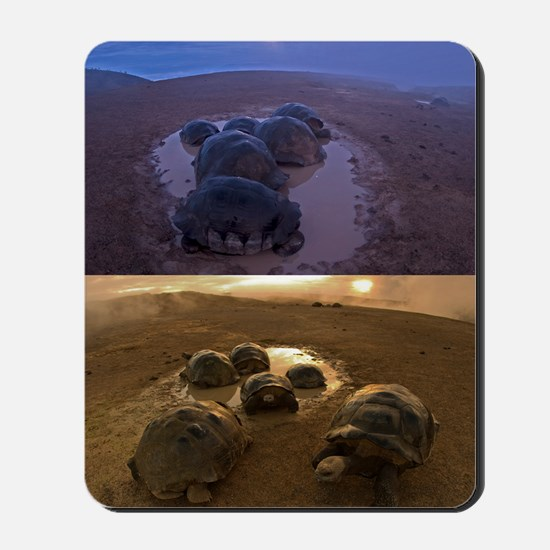 Galapagos giant tortoise thermoregulatio Mousepad