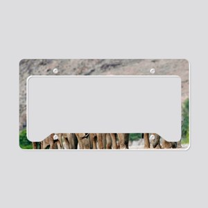 Desert-adapted elephants License Plate Holder