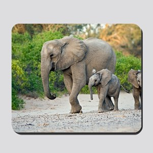 Desert-adapted elephants Mousepad