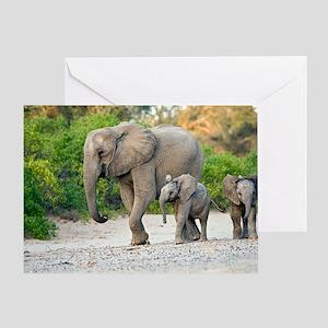 Desert-adapted elephants Greeting Card