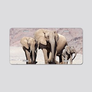 Desert-adapted elephants Aluminum License Plate