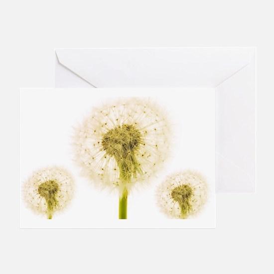 Dandelion seed heads Greeting Card